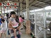 2009-04-25乳牛之家:DSC04536.JPG