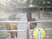 2010-12-18台南學甲頑皮世界:DSC06239.JPG