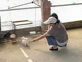 2009-04-25乳牛之家:DSC04539.JPG