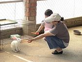 2009-04-25乳牛之家:DSC04540.JPG