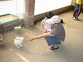 2009-04-25乳牛之家:DSC04541.JPG