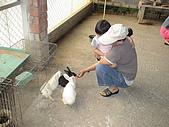 2009-04-25乳牛之家:DSC04543.JPG