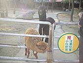 2010-12-18台南學甲頑皮世界:DSC06240.JPG