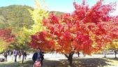 2013-10-25到2013-10-29 韓國之旅:IMAG5591.jpg