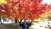 2013-10-25到2013-10-29 韓國之旅:IMAG5597.jpg