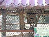 2010-12-18台南學甲頑皮世界:DSC06103.JPG