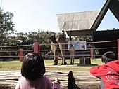 2010-12-18台南學甲頑皮世界:DSC06108.JPG