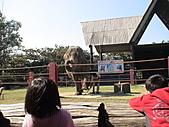 2010-12-18台南學甲頑皮世界:DSC06109.JPG