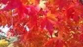 2013-10-25到2013-10-29 韓國之旅:IMAG5601.jpg