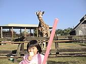 2010-12-18台南學甲頑皮世界:DSC06182.JPG