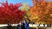 2013-10-25到2013-10-29 韓國之旅:IMAG5605.jpg