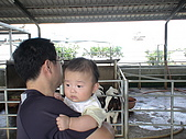 2009-04-25乳牛之家:DSC04523.JPG