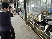 2009-04-25乳牛之家:DSC04525.JPG
