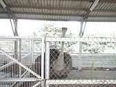 2009-04-25乳牛之家:DSC04528.JPG