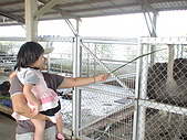 2009-04-25乳牛之家:DSC04529.JPG