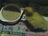 2010-10-08 Midy新寵_duck:DSC05344.JPG