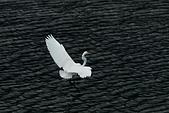 白鷺鷥之舞:鳥-蝶 008.jp