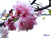中正紀念堂:P3082366.jpg