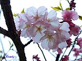 中正紀念堂:P3082367.jpg