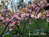 中正紀念堂:P3082385.jpg