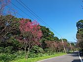 淡水山櫻花況~春櫻初開:P2061629.jpg