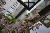 2018.04 煙花江南:2018.04.05-0 南京金陵新城飯店.JPG