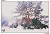 日本中部お雪見~白川鄉_Feb'10:shirakawa19.jpg