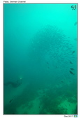 Diving in Palau_Dec'17:PalauF8.jpg
