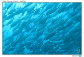 Diving in Palau_Dec'17:PalauG3.jpg