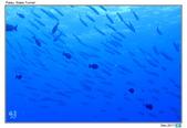 Diving in paradise, Palau_Dec'17:Palau38.jpg