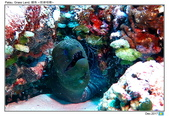 Diving in paradise, Palau_Dec'17:Palau28.jpg