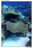 Diving in paradise, Palau_Dec'17:Palau57.jpg