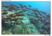 Diving in Palau_Dec'17:PalauG0.jpg