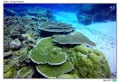 Diving in paradise, Palau_Dec'17:Palau62.jpg