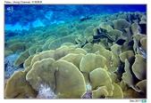 Diving in paradise, Palau_Dec'17:Palau62b.jpg