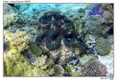 Diving in paradise, Palau_Dec'17:Palau66.jpg