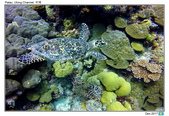 Diving in paradise, Palau_Dec'17:Palau53g.jpg
