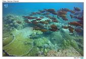 Diving in Palau_Dec'17:PalauF9.jpg