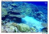 Diving in paradise, Palau_Dec'17:Palau53d.jpg