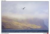 Bear Island, Norway_Jul'18:BI17.jpg