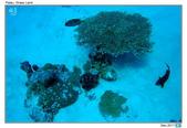 Diving in paradise, Palau_Dec'17:Palau29.jpg