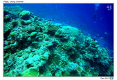 Diving in paradise, Palau_Dec'17:Palau49.jpg