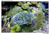 Diving in paradise, Palau_Dec'17:Palau53h.jpg