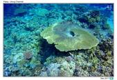 Diving in paradise, Palau_Dec'17:Palau53m.jpg