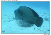 Diving in Palau_Dec'17:PalauG1.jpg