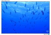 Diving in paradise, Palau_Dec'17:Palau42.jpg