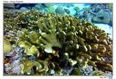 Diving in paradise, Palau_Dec'17:Palau54.jpg