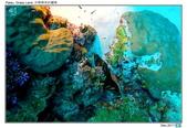 Diving in paradise, Palau_Dec'17:Palau27.jpg
