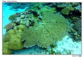 Diving in paradise, Palau_Dec'17:Palau55.jpg
