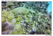 Diving in paradise, Palau_Dec'17:Palau61.jpg